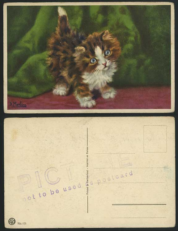 CAT, Kitten D. Merlin Artist Signed Old Colour Postcard