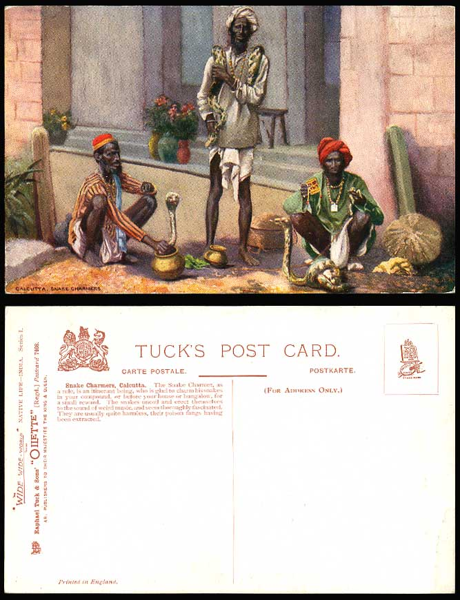 India, Native Snake Charmers, Calcutta, Old Tuck's Oilette Postcard Cobra Snakes