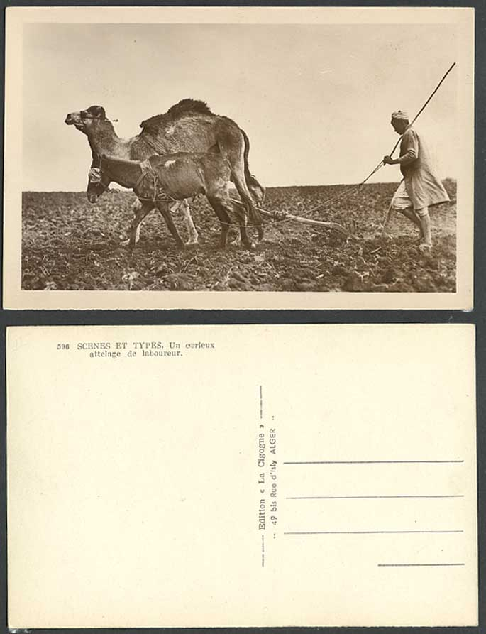 Algeria Blindfolded Donkey Camel Ploughing Field Farmer Agriculture Old Postcard