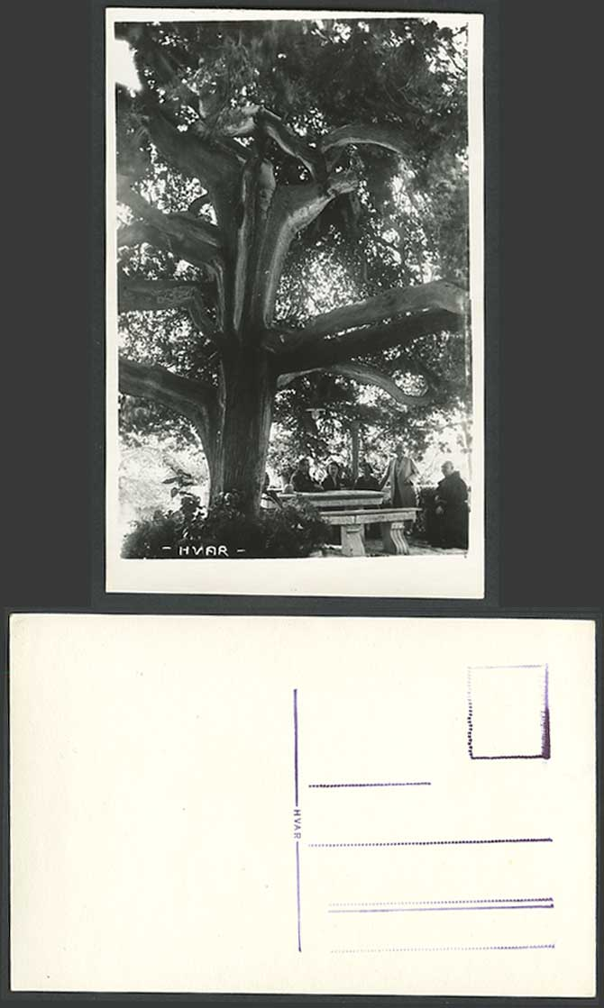 Croatia Old Postcard Hvar Croatian Island Adriatic Sea Priest Large Tree Priest