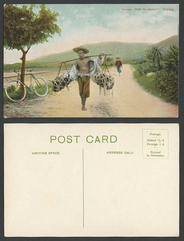 Hong Kong China Old Postcard Native Chinese Coolie Taking PIGS to Market BICYCLE