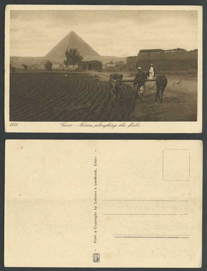 Egypt Old Postcard Cairo Pyramid Giza Cattle Native Ploughing Fields Farmer, Dog