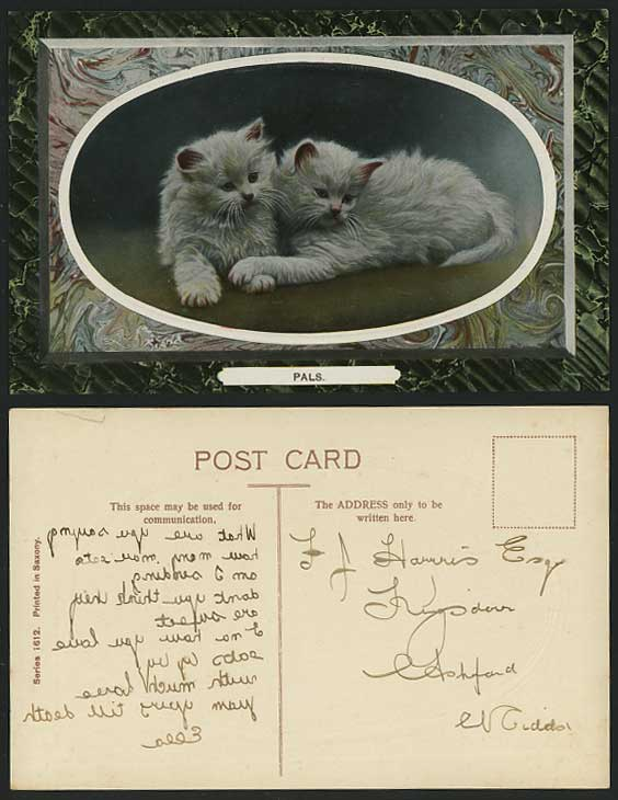 2 Lovely CATS Kittens PALS Old Embossed Postcard