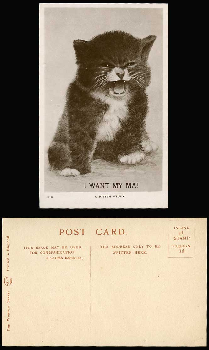 cat i want my ma a kitten study old real photo postcard cats
