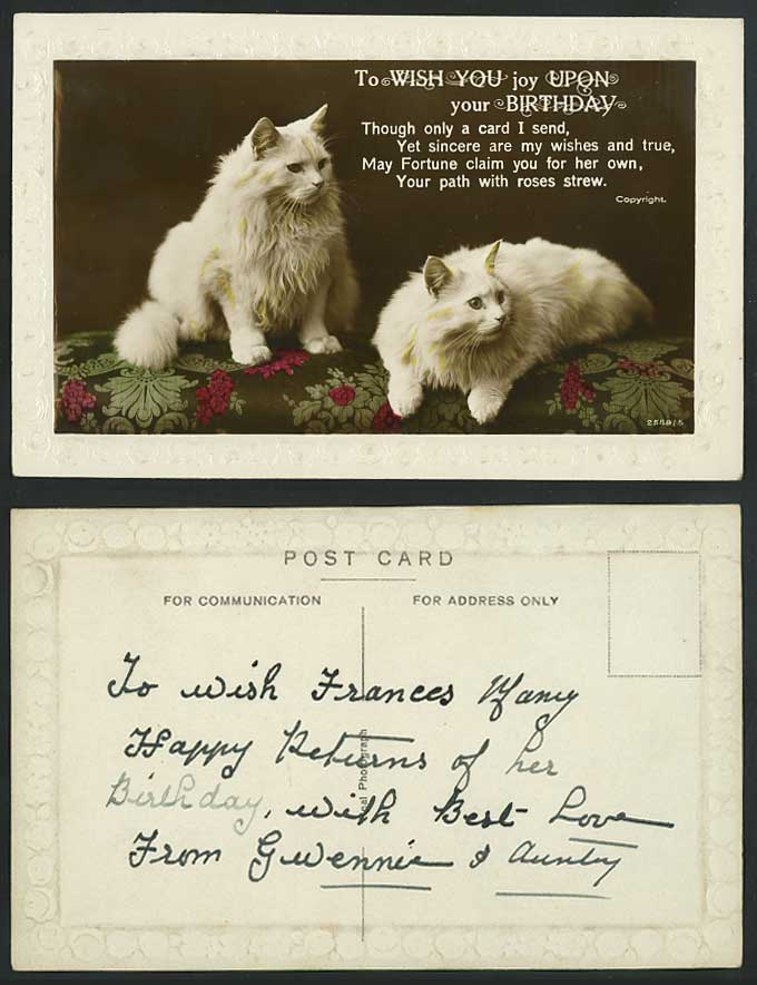 Beautiful White Persian Cats Old Embossed Postcard Wish You Joy Upon Ur Birthday