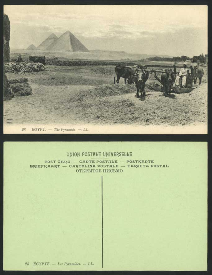 Egypt Old Postcard Cairo Pyramids Plough Farmers & Cattle Ploughing Fields LL 28