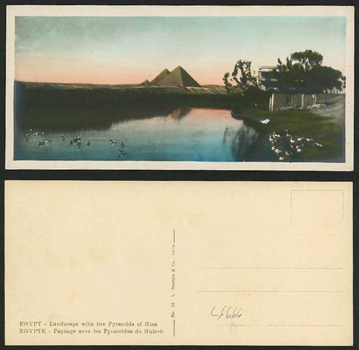 Egypt Old H Tinted Postcard Cairo Landscape Pyramids Giza Ducks Birds Nile River