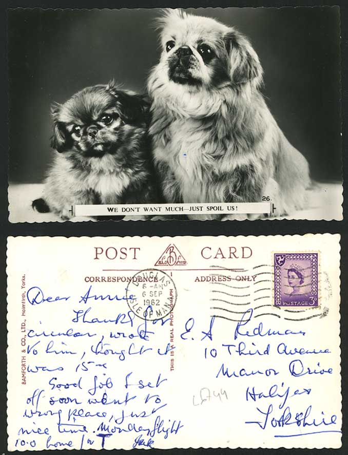 Pekingese Dogs Puppies We Don't Want Much Just Spoil Us! Puppy 1962 Old Postcard