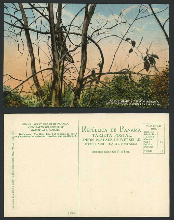 Panama Old Colour Postcard IGUANA Giant Lizard View Taken on Gatun Lake, Animals