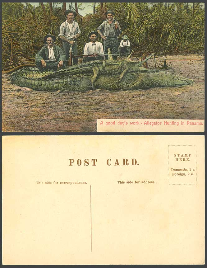 Alligators Crocodiles Alligator Hunting in Panama A Good Day's Work Old Postcard