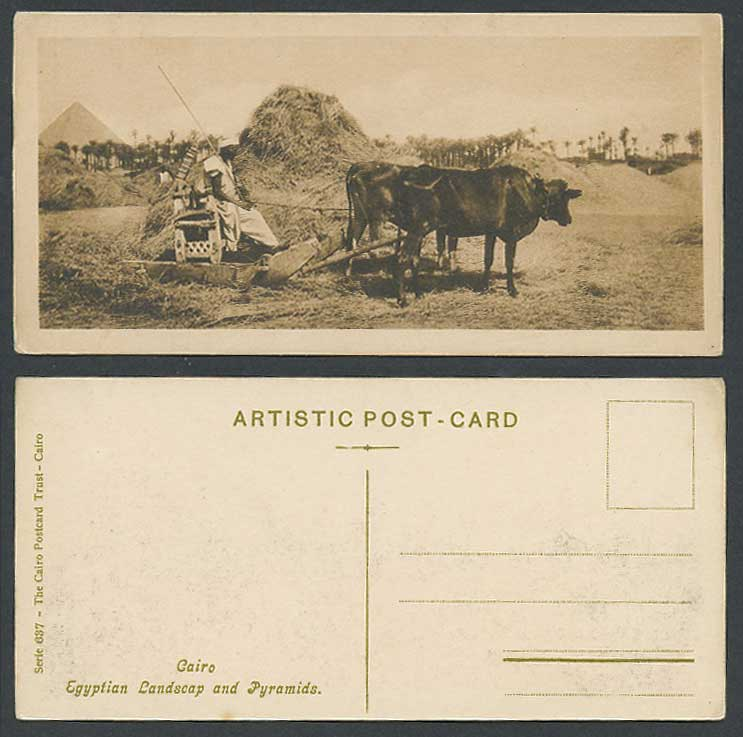 Egypt 1918 Old Postcard Cairo Egyptian Landscape Pyramids, Farmer Cattle at Work