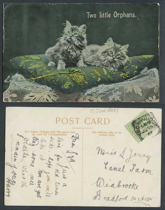 Cats Kittens 2 Two Little Orphans on Cushion Cat Kitten 1903 Old Colour Postcard