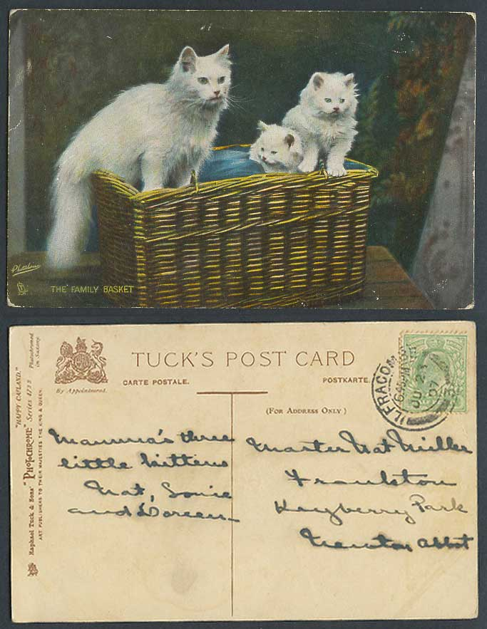 Cats Kittens The Family Basket 1907 Old Postcard Tuck's Happy Catland Cat Kitten