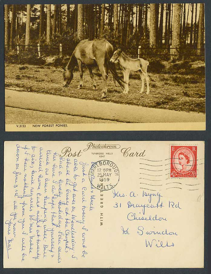 New Forest Ponies Horses Pony Baby Horse Hampshire Photochrom 1959 Old Postcard