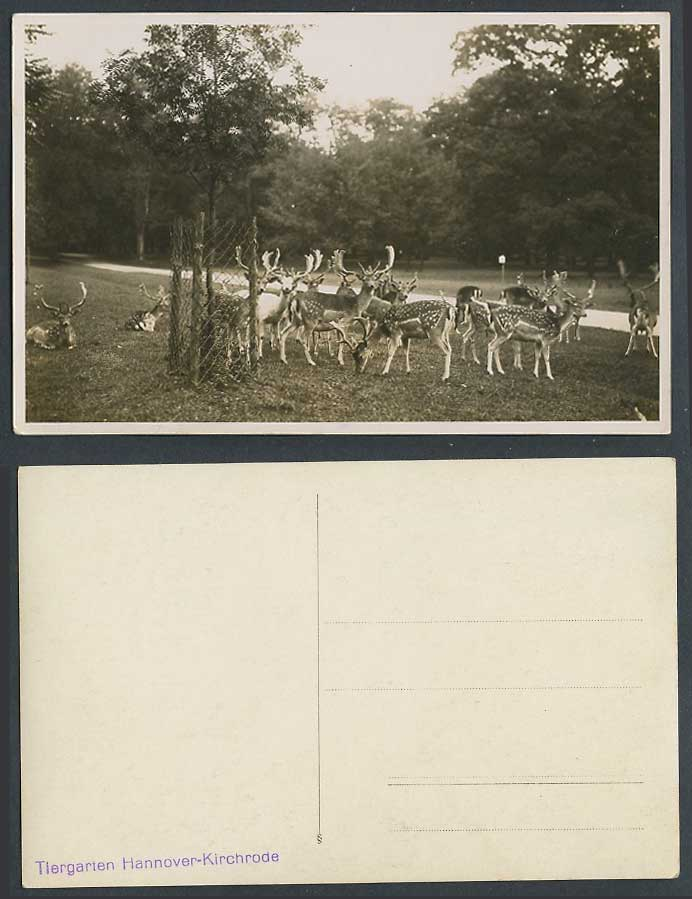 Deer Stags Zoo Animals, Tiergarten Hannover Kirchrode Germany Old Photo Postcard