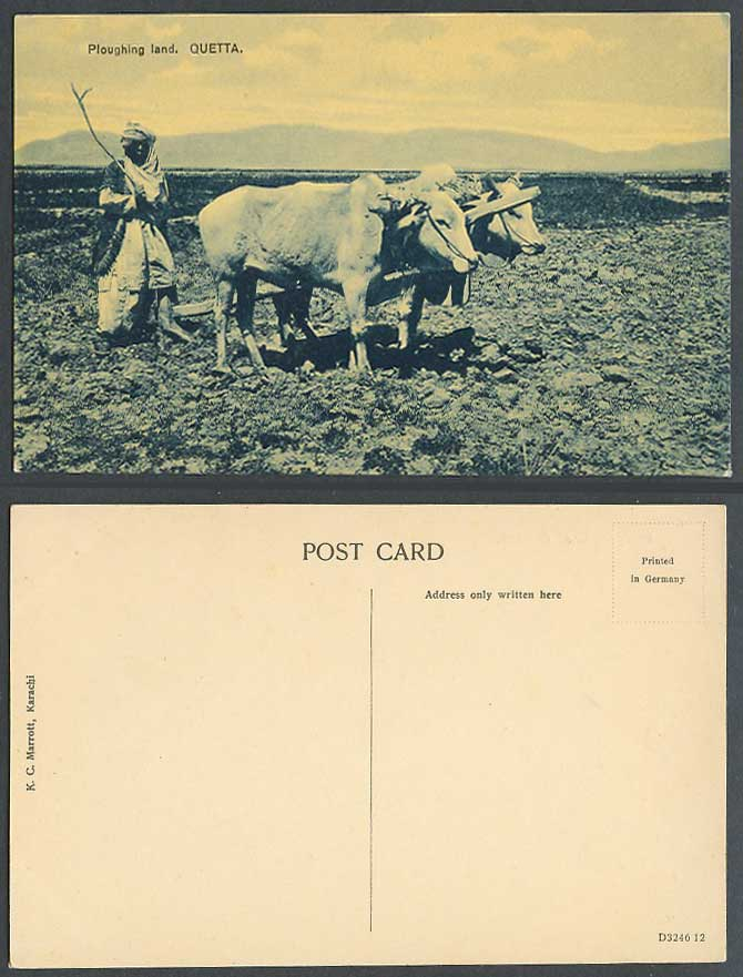 Pakistan Old Postcard Native Farmer Cattle Ploughing Farm Land QUETTA KC Marrott