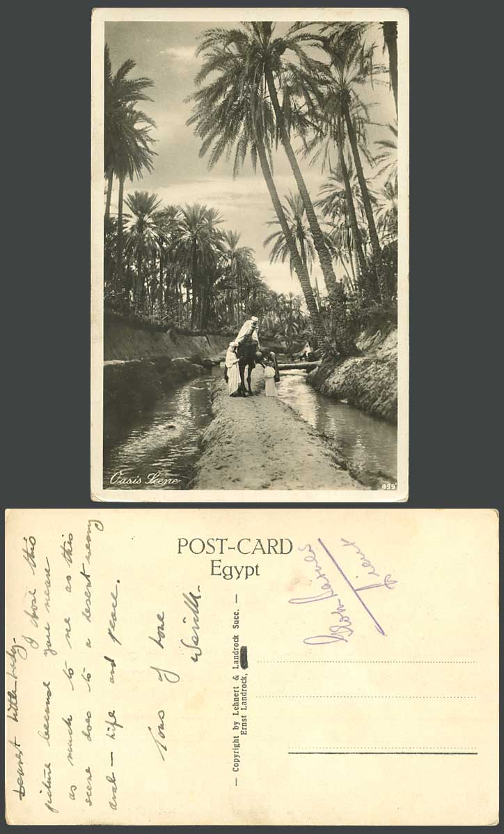 Egypt Old Real Photo Postcard Cairo Oasis Scene, Palm Trees, Bridge River, Camel