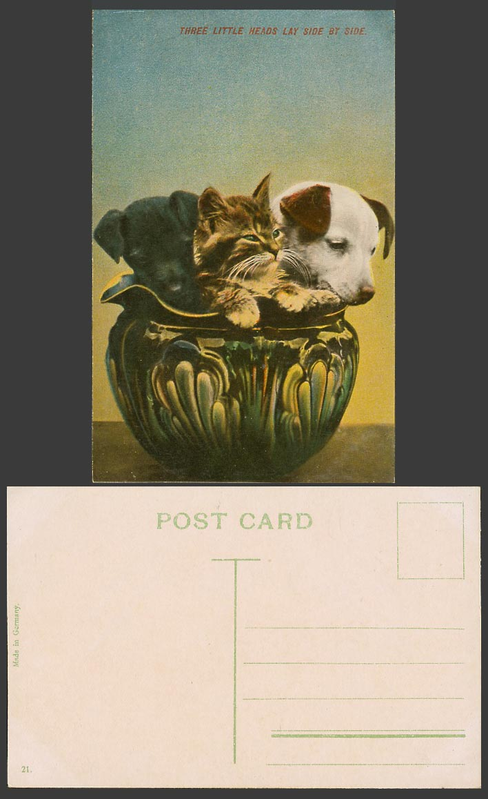 Cat Kitten Dogs Puppies, Three Little Heads Lay Side by Side Old Colour Postcard
