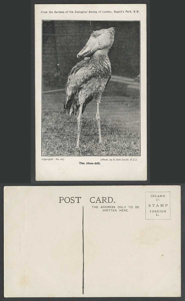 Shoe-Bill Shoebill Bird Zoological Gardens Zoo Animal D. Seth-Smith Old Postcard