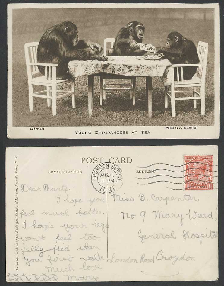 Young CHIMPANZEES at TEA 1931 Old Postcard Monkeys London Zoo Animals Cups Table