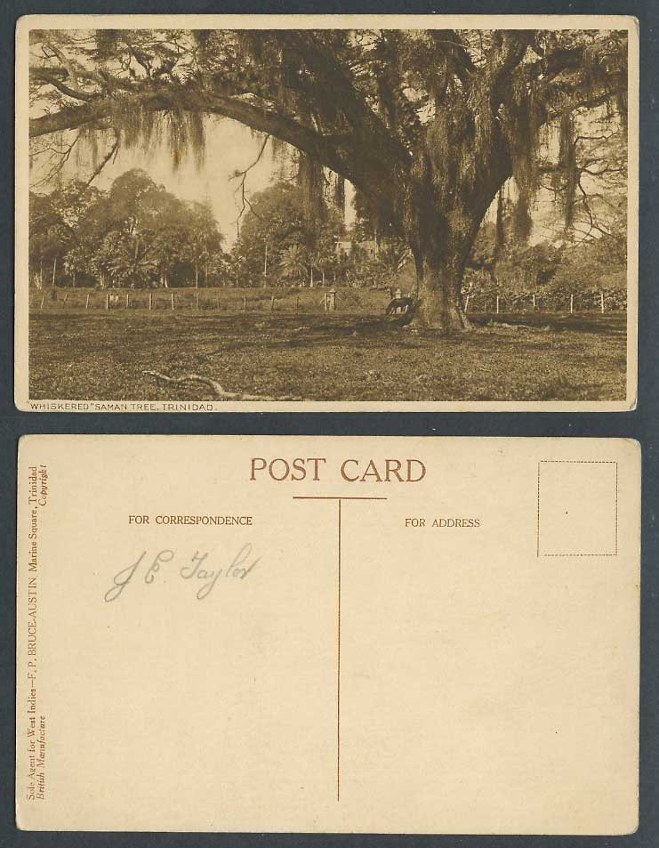 Trinidad B.W.I. Old Postcard A Large Whiskered SAMAN TREE, British West Indies