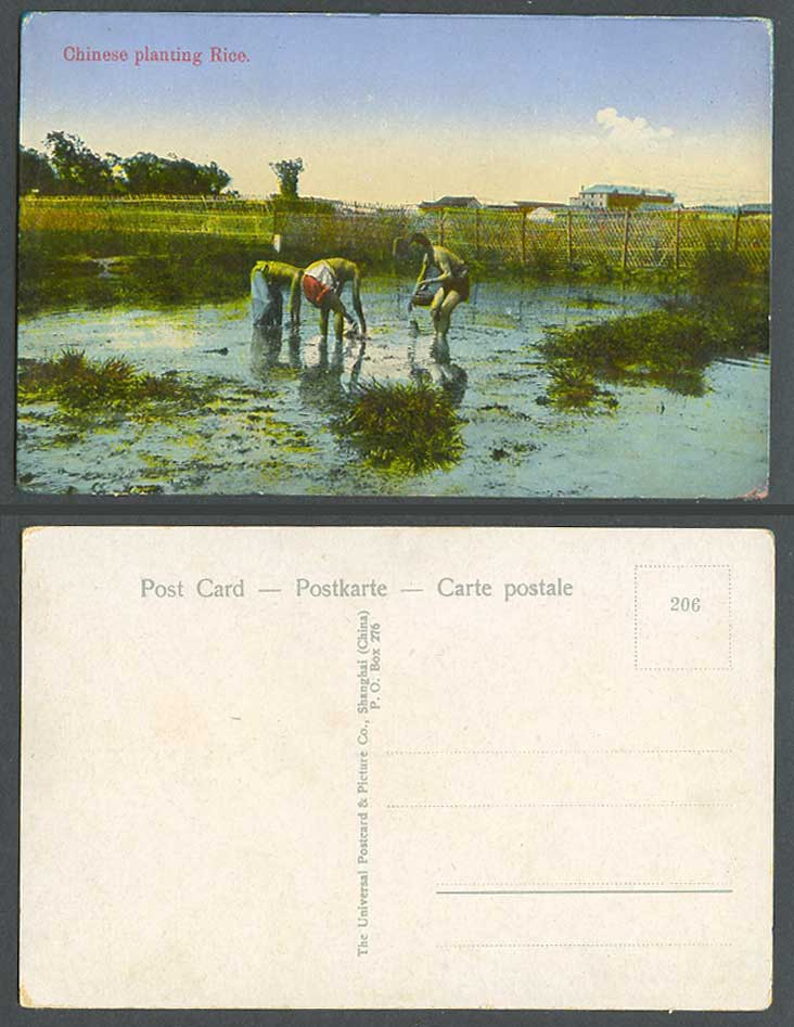 China Old Colour Postcard Chinese Farmers Planting Rice Paddy Field Shanghai 206