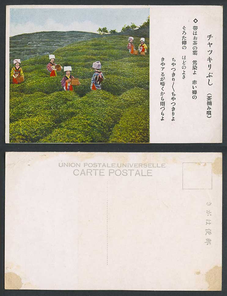 Japan Old Colour Postcard Native Japanese Workers Women Pluckers Plucking Tea 茶摘