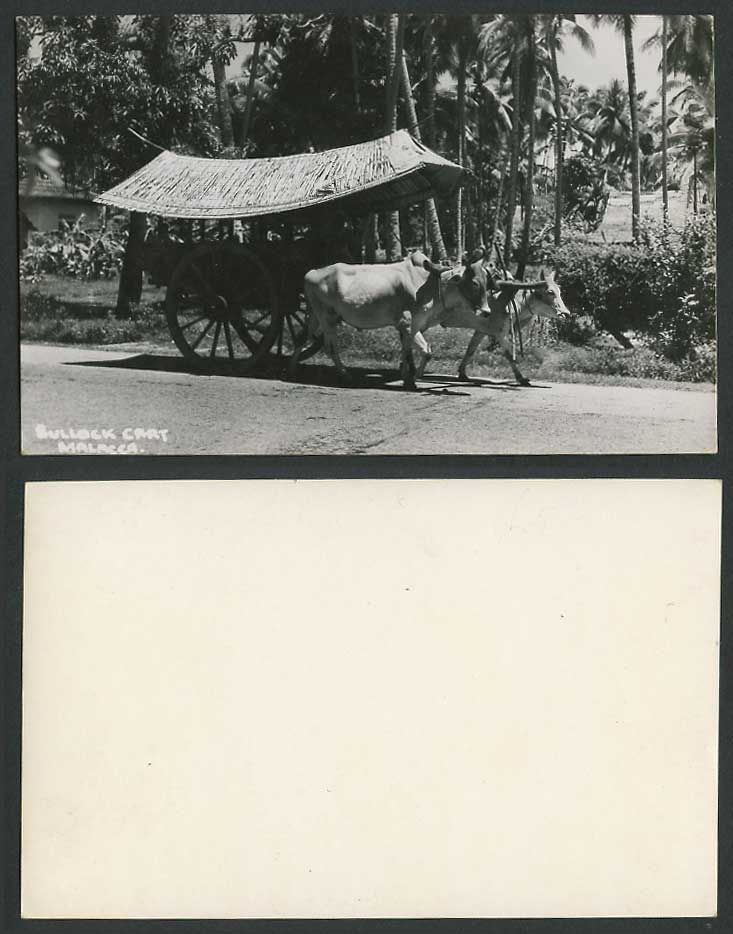 Malacca Native Malay Double Bullock Cart Old Real Photo Postcard Palm Trees Oxen