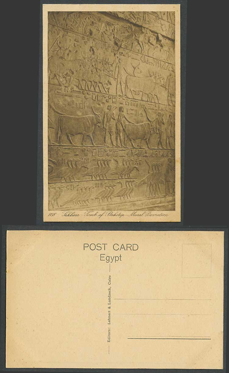 Egypt Old Postcard Sakkara Tomb of Ptahhotep Mural Decoration, Birds Cattle Oxen