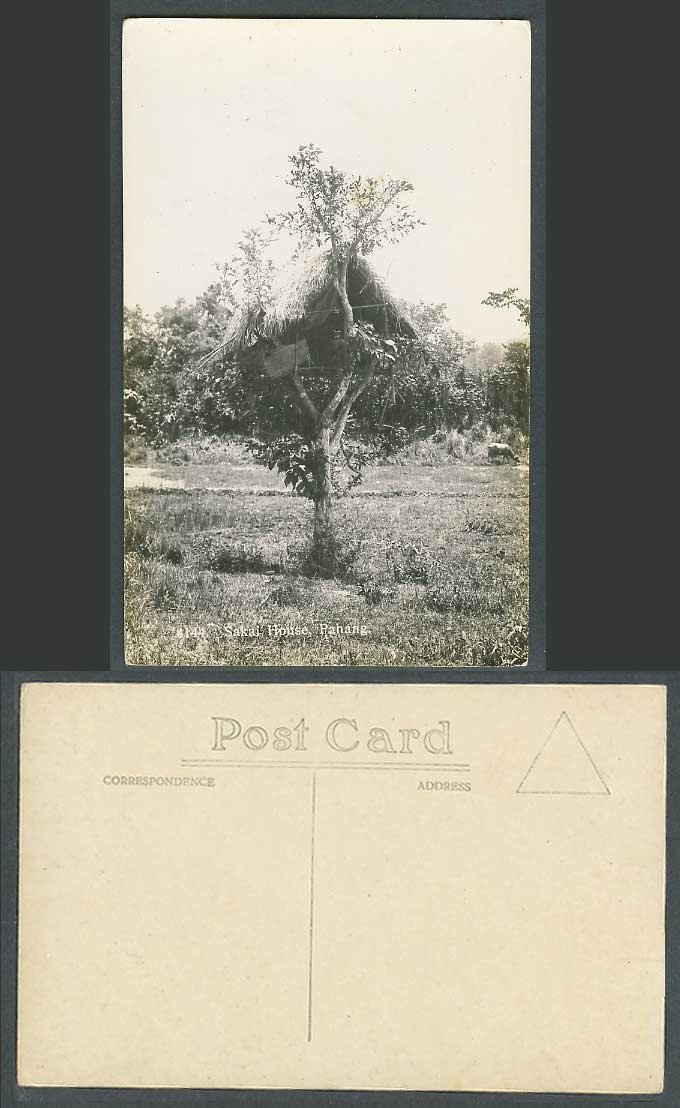 Pahang Old Real Photo Postcard Sakai House Native Sakais Dwelling Treehouse Tree