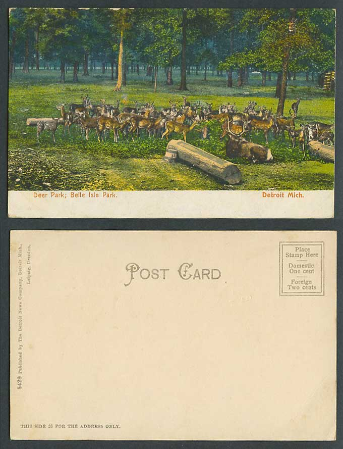 USA Old Colour Postcard Detroit Mich. Deer Park Belle Isle Park Animals Michigan