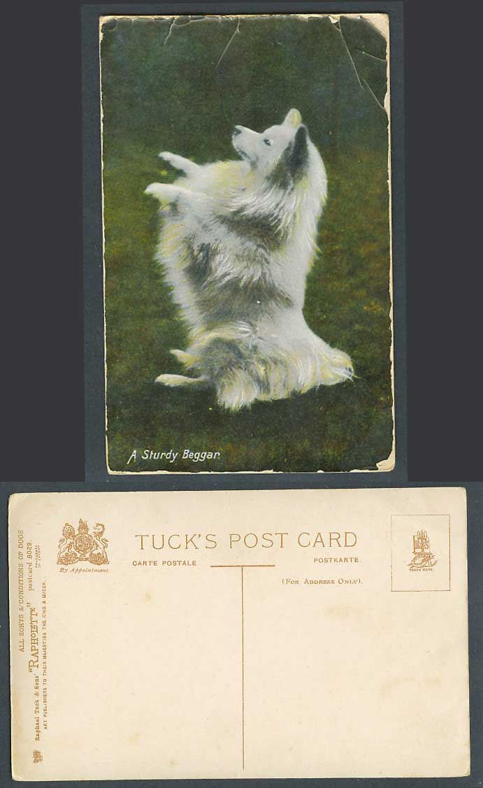 Dog Puppy, A Sturdy Beggar, Tuck's All Sorts & Conditions of Dogs Old Postcard
