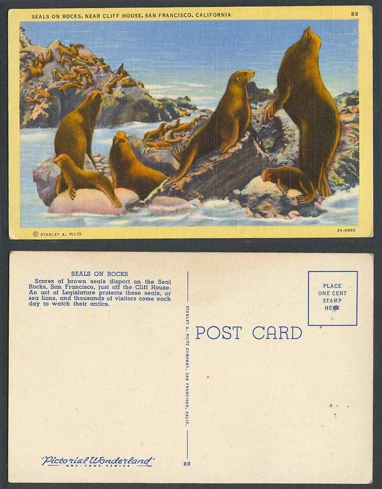 Seals on Rocks, near Cliff House, Sea Lions, San Francisco Cal. USA Old Postcard