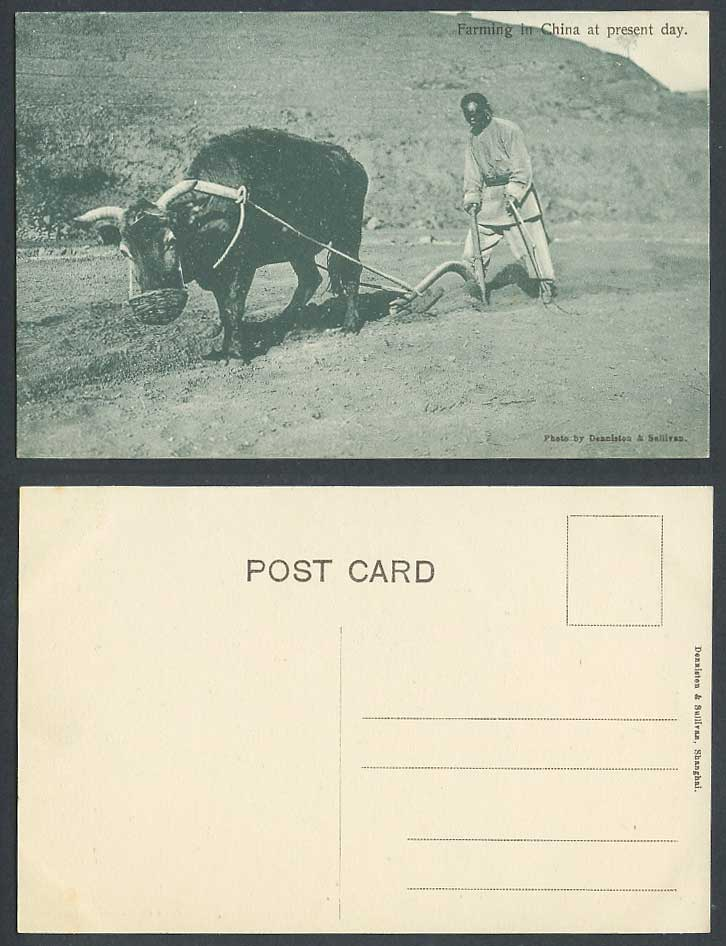China Old Postcard Farming at Present Day Chinese Farmer Buffalo Cattle Shanghai