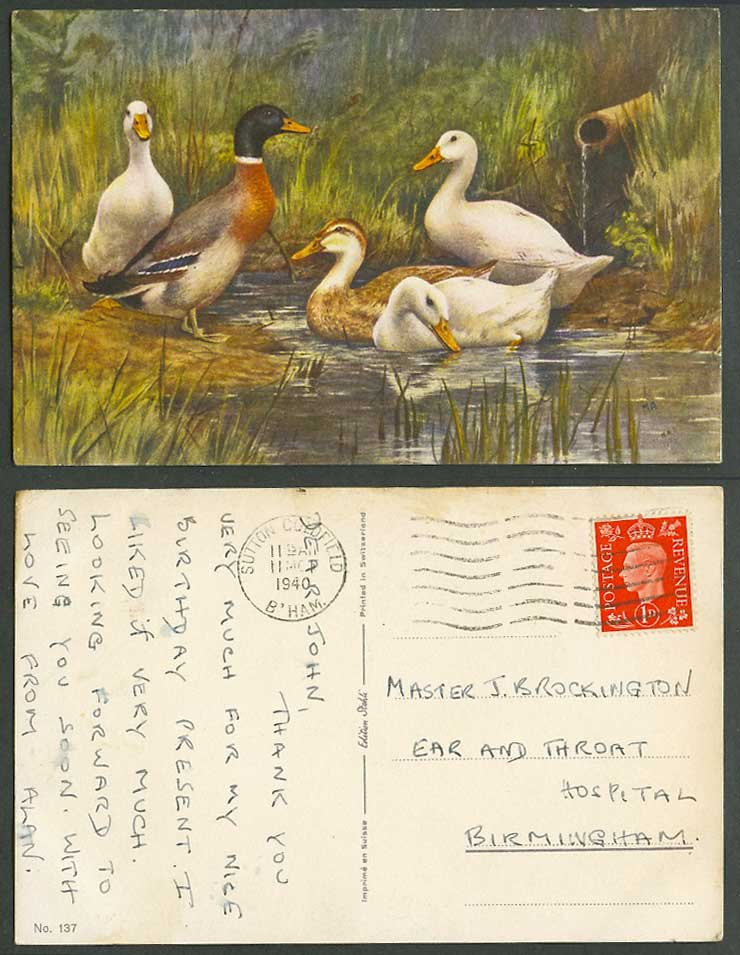 Goose Geese Bird Birds MA Artist Signed 1940 Old Postcard to Ear Throat Hospital