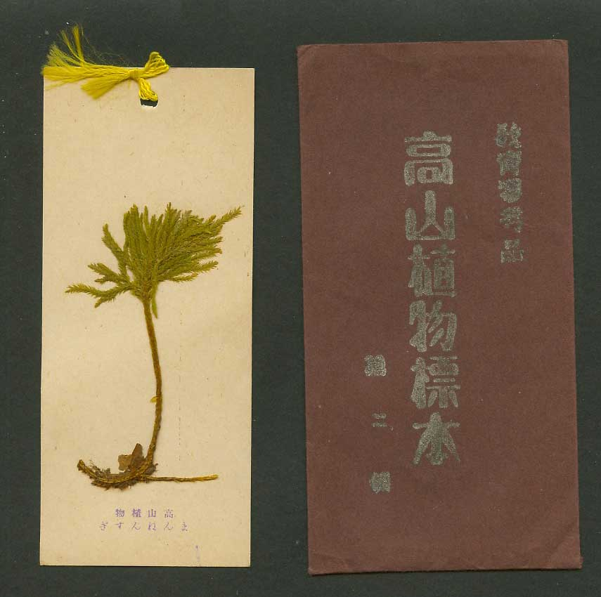Japan Novelty Old Card Bookmark Real Plant from High Mountain Wallet 教育參考品高山植物標本