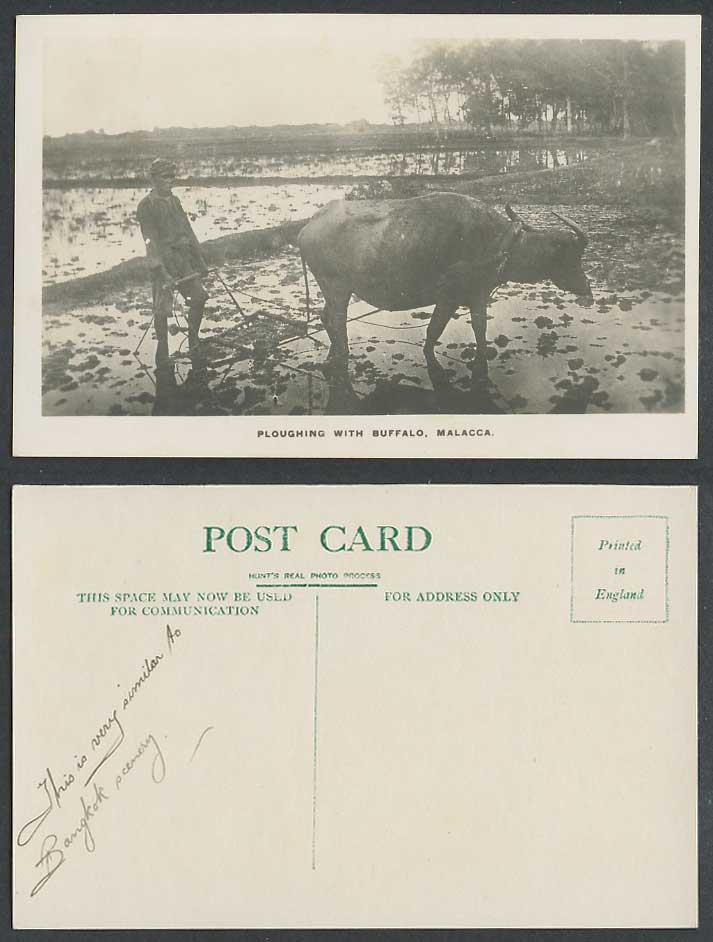 Malacca Old Real Photo Postcard Native Farmer Ploughing with Buffalo Paddy Field
