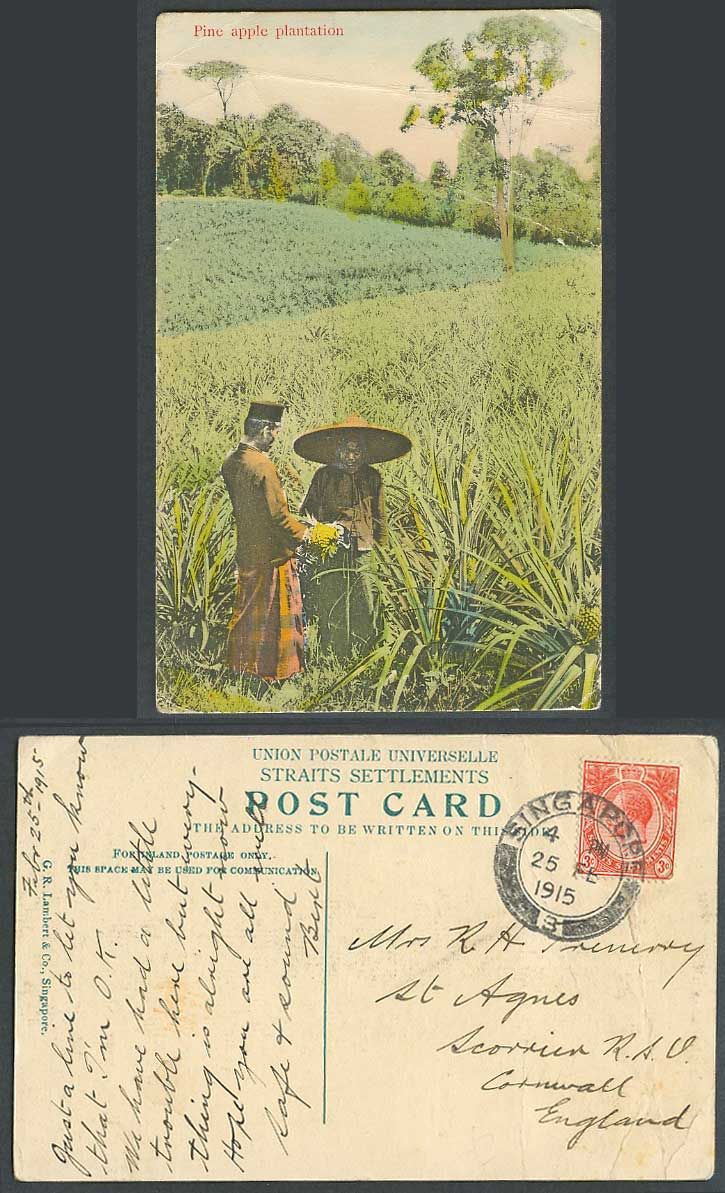 Singapore KG5 3c 1915 Old Hand Tinted Postcard Pineapples Pine Apple Plantation