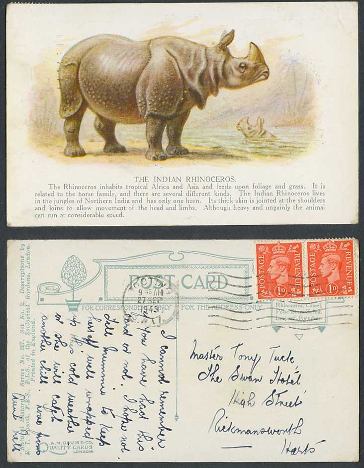 India Indian Rhinoceros Rhino. Zoo Animals London 1943 Old Artist Drawn Postcard