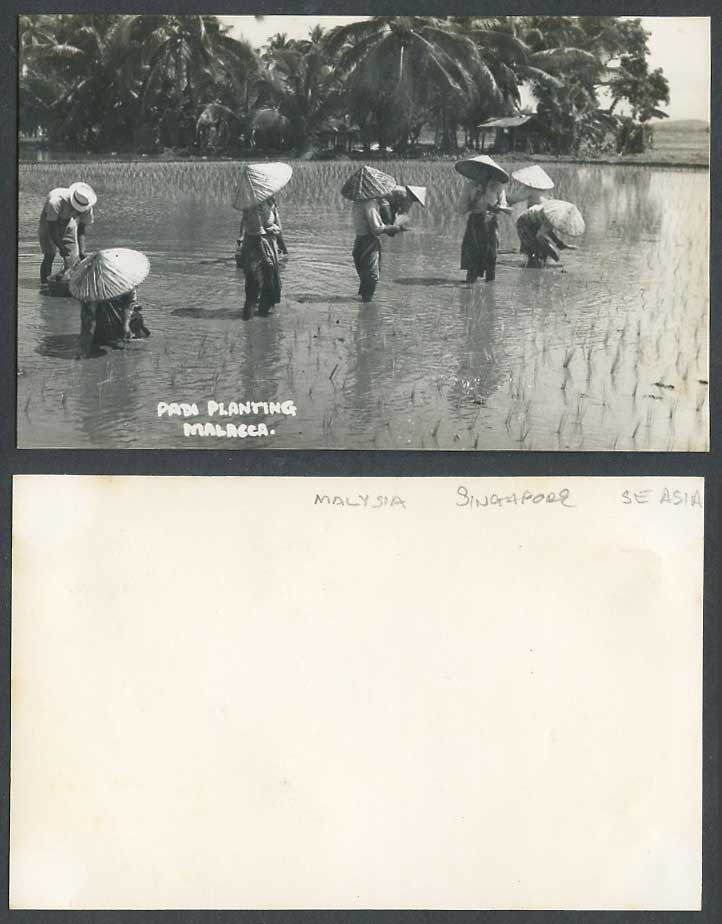 Malacca Old Real Photo Postcard Padi Planting Native Farmers in Paddy Field Hats