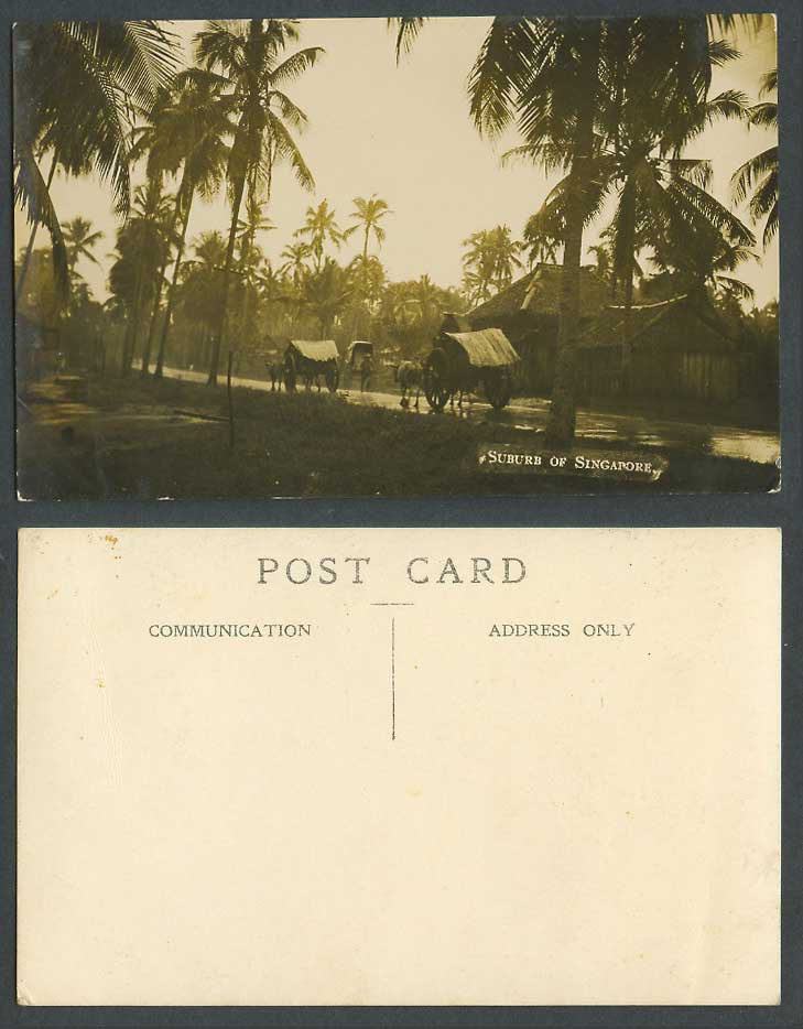 Singapore Suburb of Old Real Photo Postcard Street Scene Cattle Carts Palm Trees
