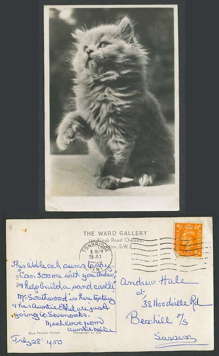 Blue Persian Kitten Cat by Ylla 1950 Old Real Photo Postcard Ward Gallery London