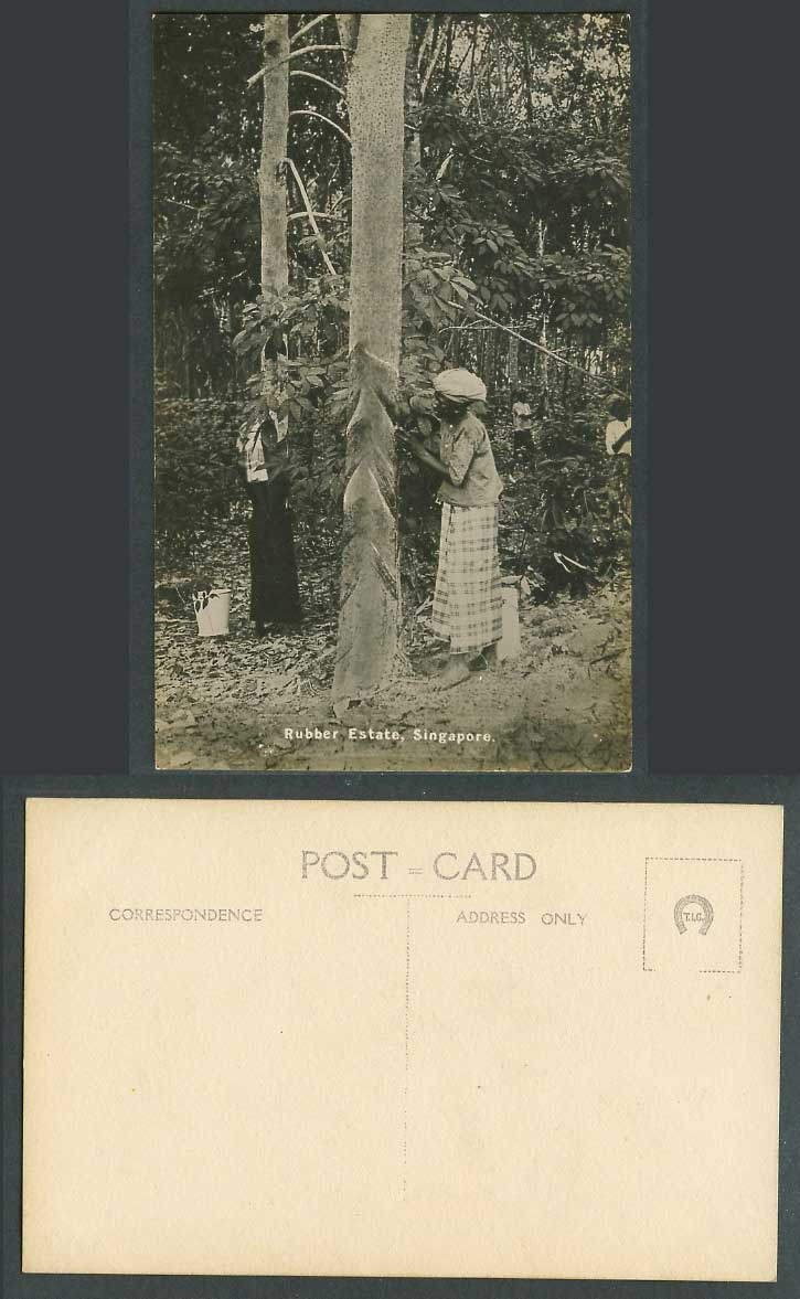 Singapore Old Real Photo Postcard Rubber Estate Native Malay Tapper Tapping Tree