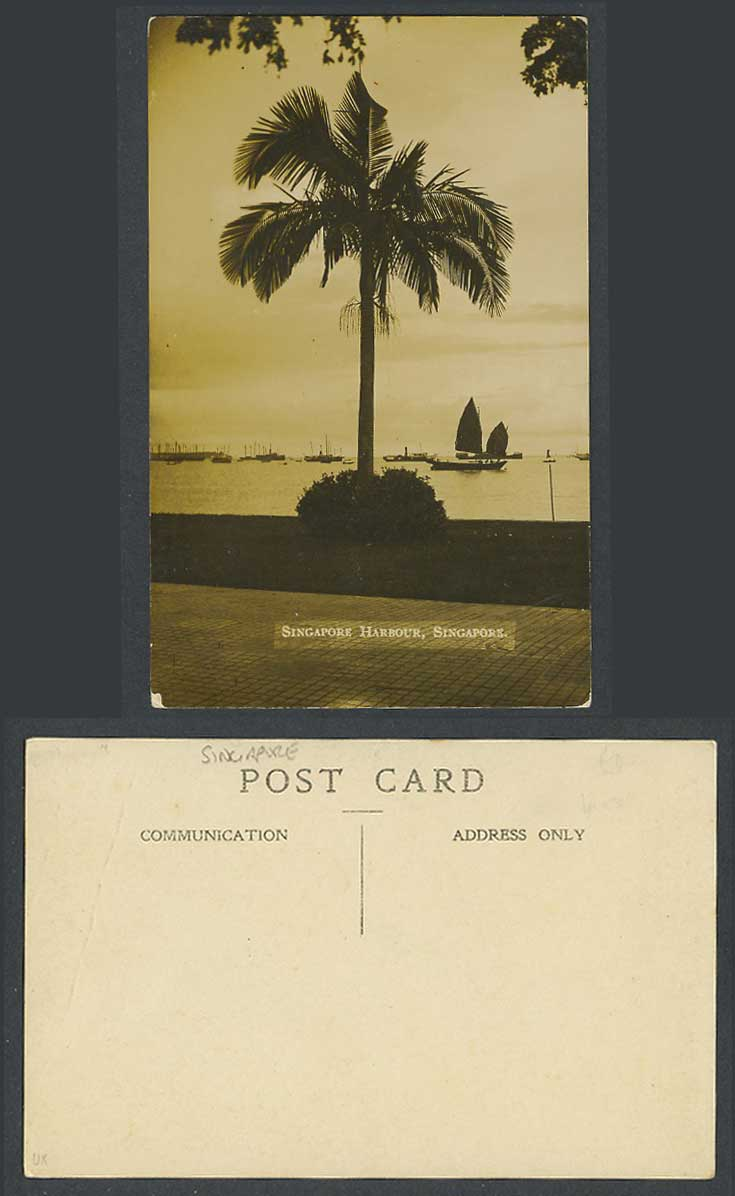 Singapore Harbour Old Real Photo Postcard Sailing Boats Ships Palm Tree Harbour