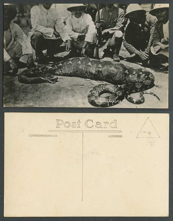 Singapore Malay Python Snake, a Deer in Stomach, Hunters Old Real Photo Postcard