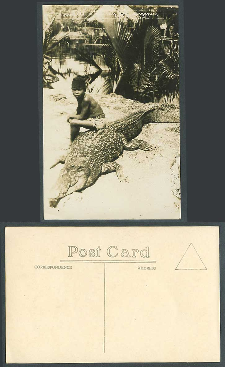 Singapore, Native Malay Boy Sit on a CROCODILE Alligator Old Real Photo Postcard