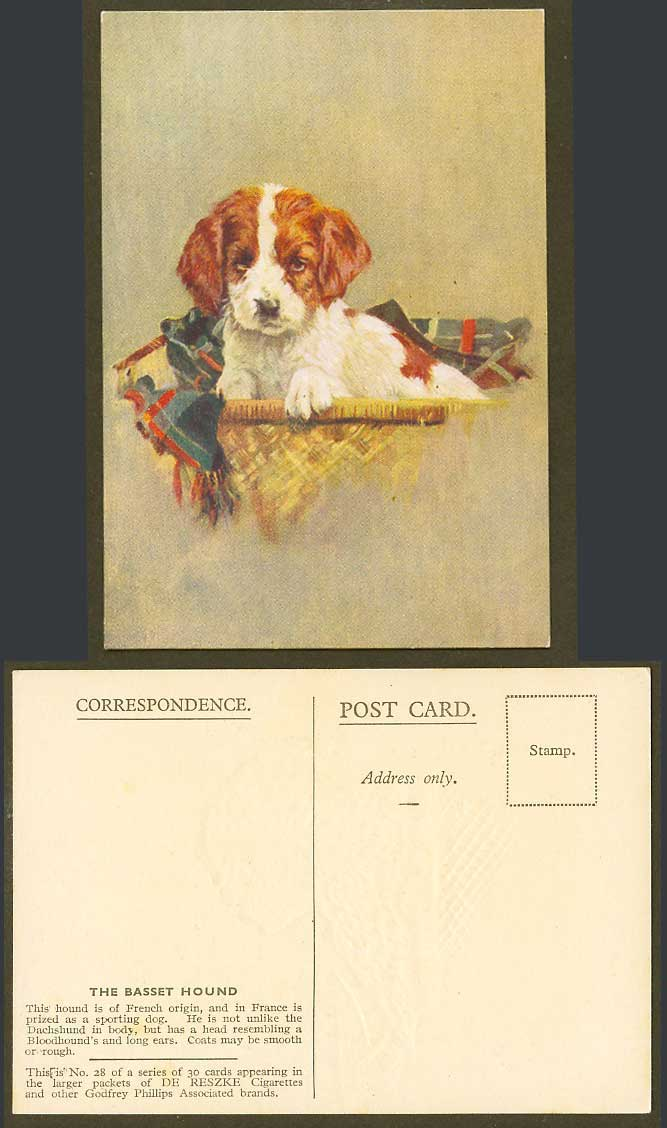 The Basset Hound French Origin Dog Puppy Old Postcard De Reszke Cigarettes No.28