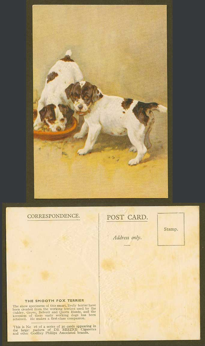 Smooth Fox Terrier, Dog Puppy Dogs Puppies Old Postcard De Reszke Cigarettes 16