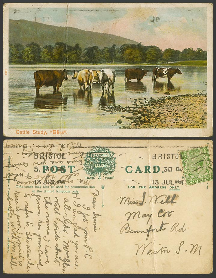 Cattle Studies Bliss Cow in Water Animals Mountains Lake KG5 Old Colour Postcard
