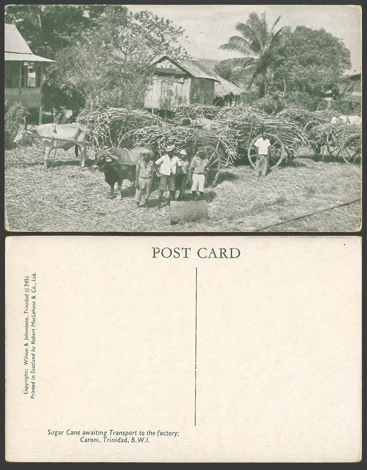 Trinidad B.W.I. Old Postcard Sugar Cane Awaiting Transport to The Factory Caroni